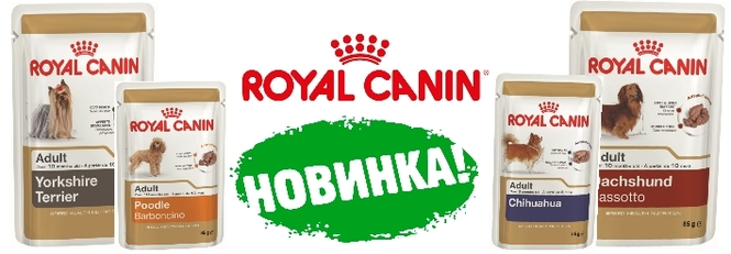 Canin royal jobs